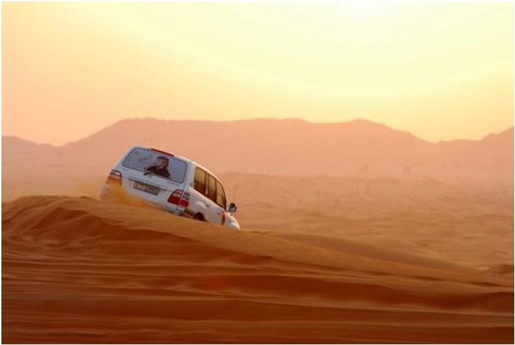 Desert Night Safari