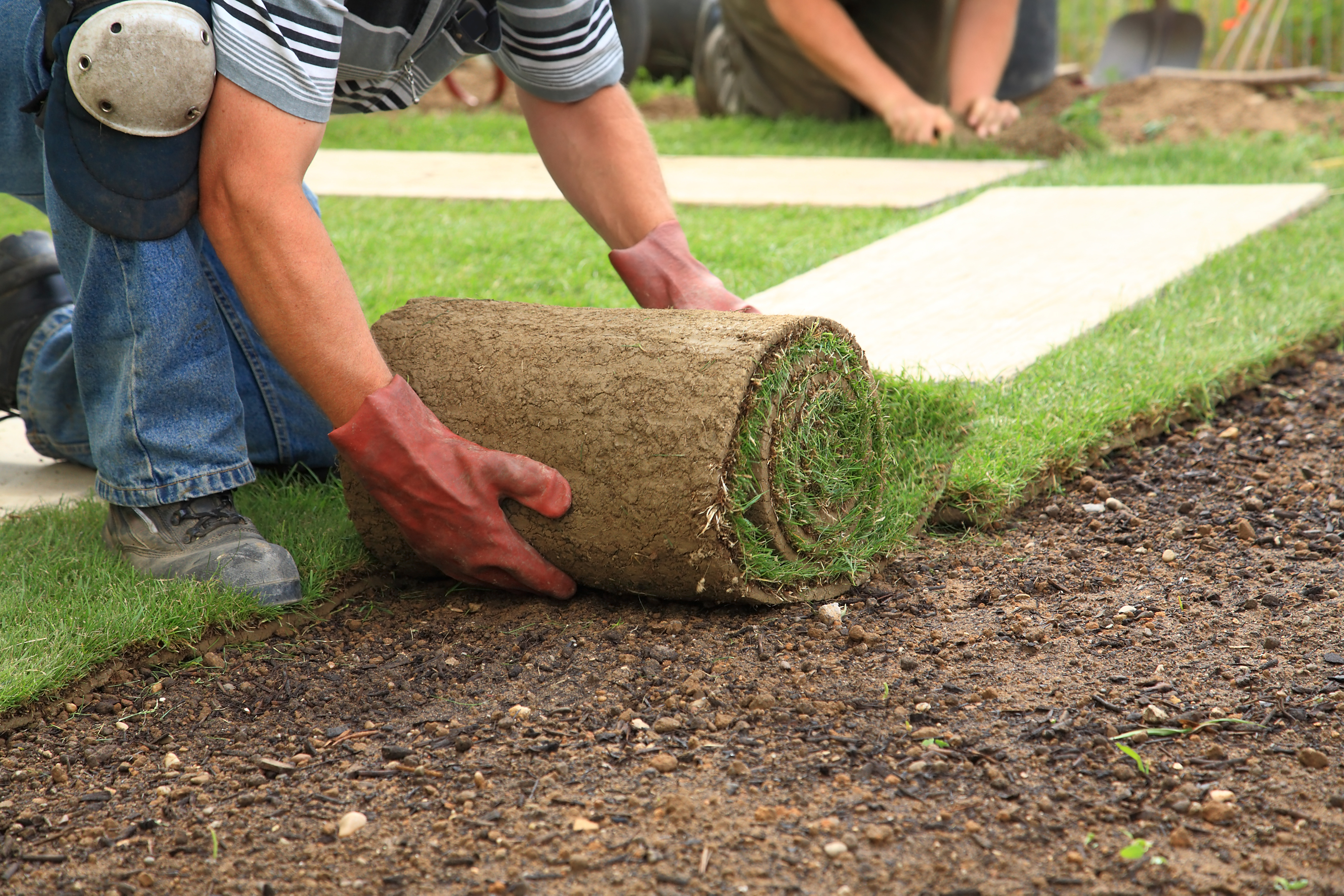 Everything You Need to Know About Selecting Lawn Suppliers