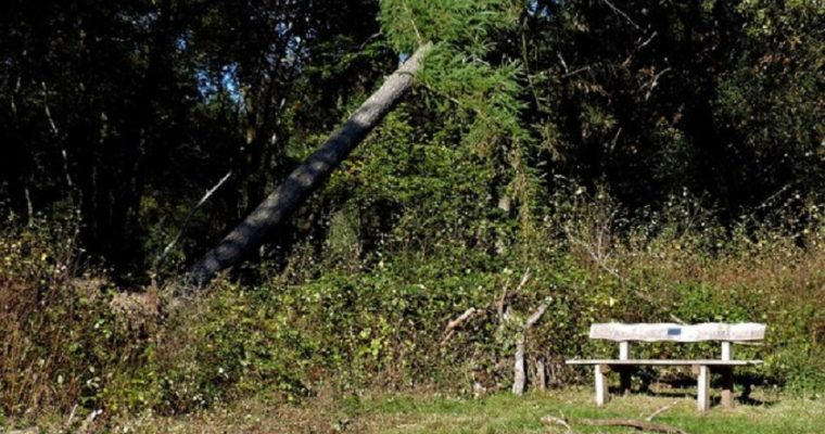 Are Your Trees in Danger of Falling?
