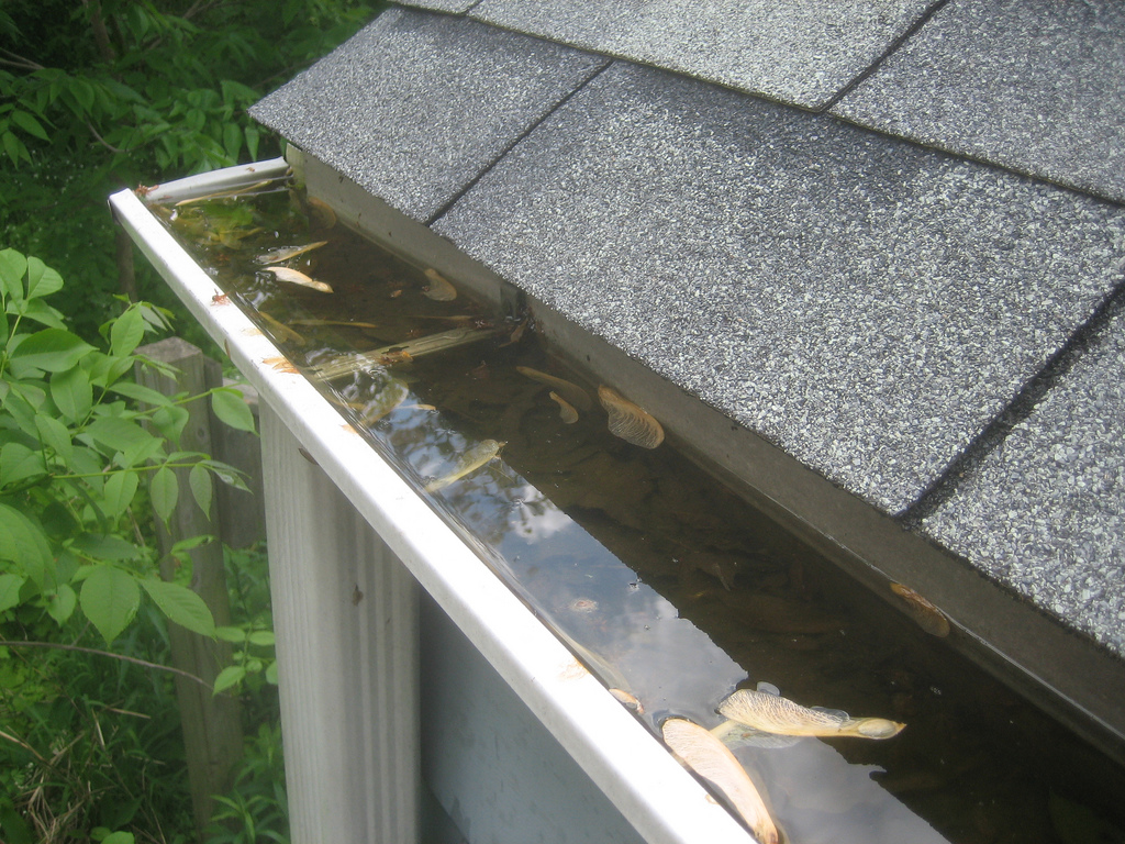 Cleaning the Gutters and Downspouts