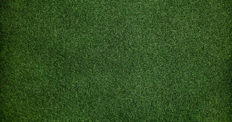 How to Take Care of Your Lawn Throughout the Year?