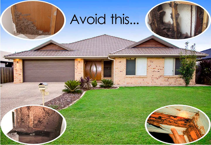 Termite Control – Best Way to Protect Your House