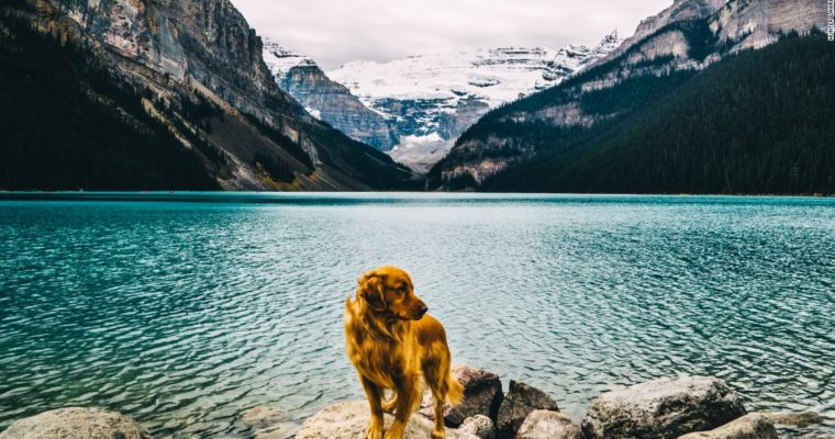 4 Great Tips for Traveling with Dog