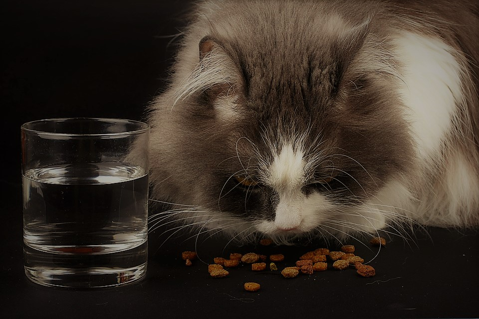 What are the Cat Foods Available Online for our Feline?