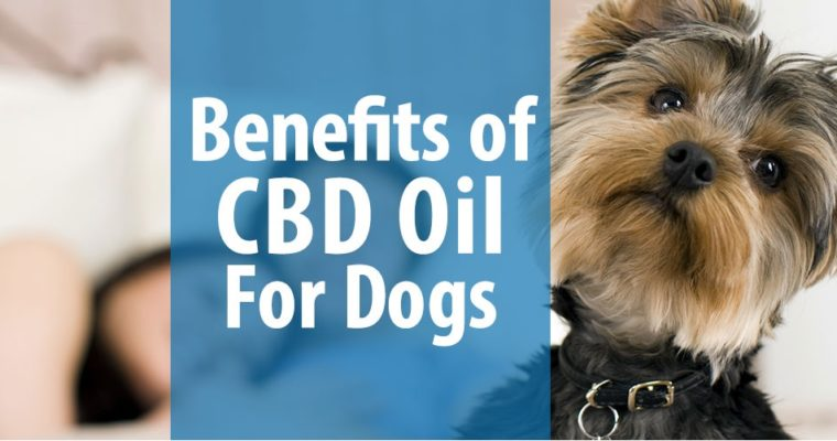 Benefits of Hemp CBD Oil for Dogs, Cats, Horses & Other Pets