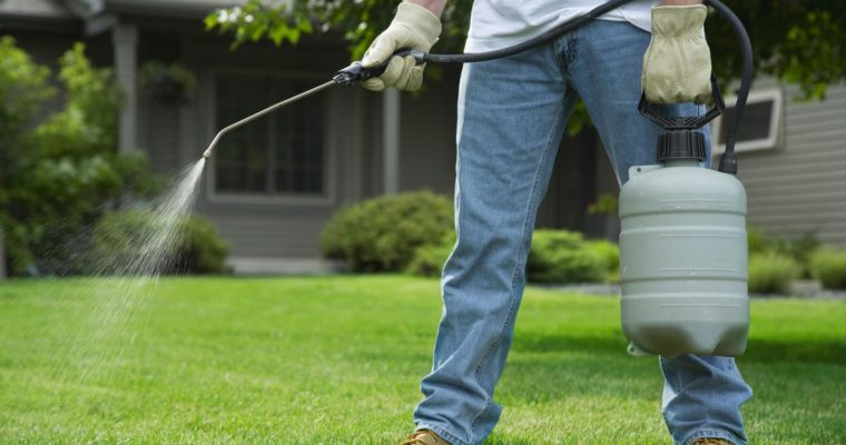 Useful Tips for Your Garden Pest Control