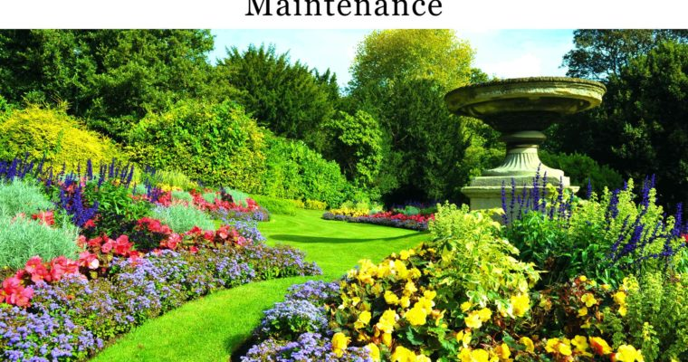 6 Useful Tips that Can Help You in Garden Maintenance