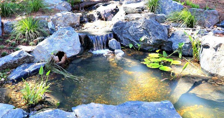 Important Pond Maintenance Service Considerations!