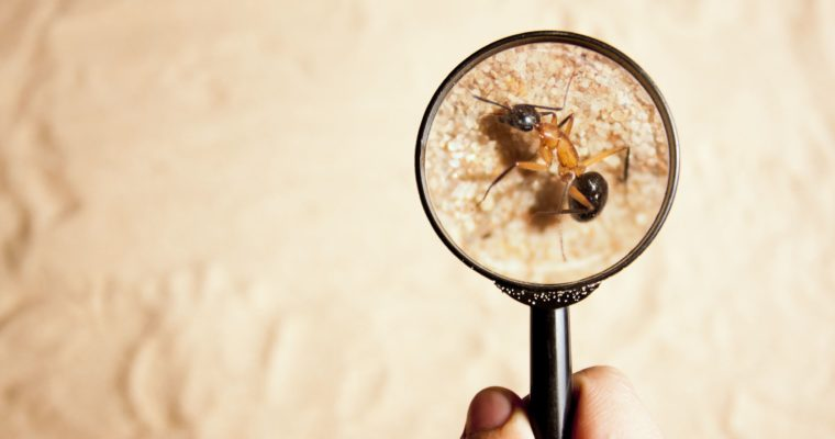 5 Natural Ingredients Which Act As a Rescue To Get Rid Off Termites