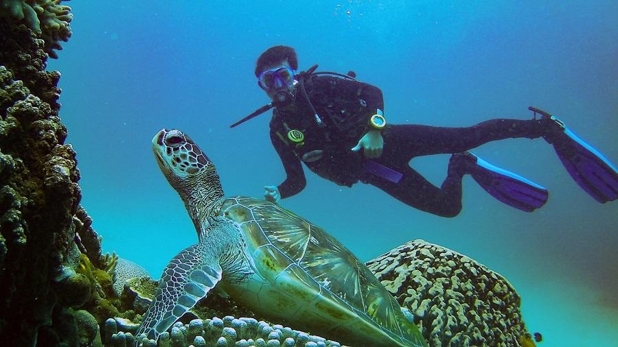A Comprehensive Guide to Diving In Komodo Island - WanderGlobe