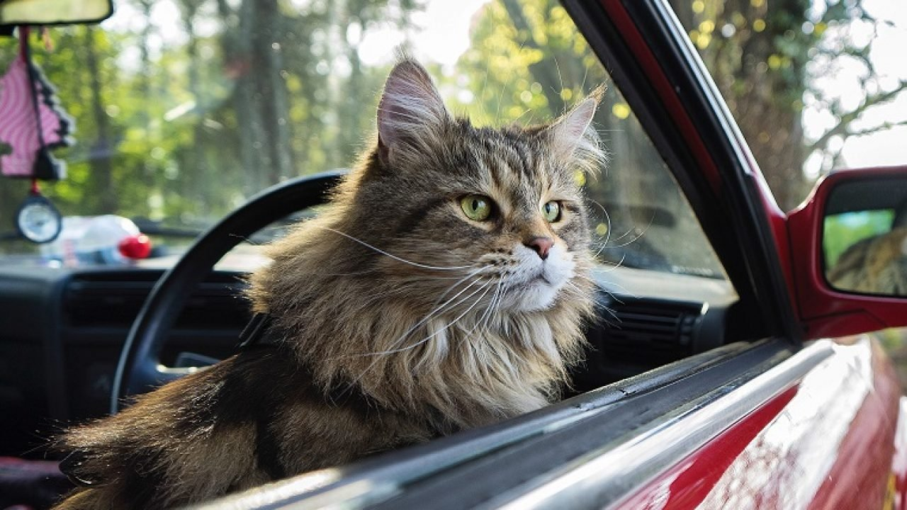 6 Reasons to Take Your Cat on a Trip - WanderGlobe